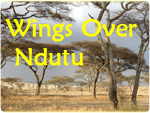 Wings Over Serengeti