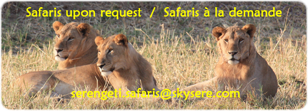Sky of  Serengeti Safaris Lions Tarangire